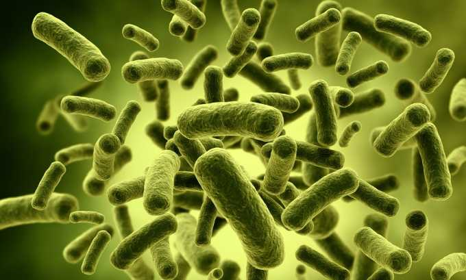 Алоэ предотвращает размножение бактериальной флоры на слизистой оболочке прямой кишки