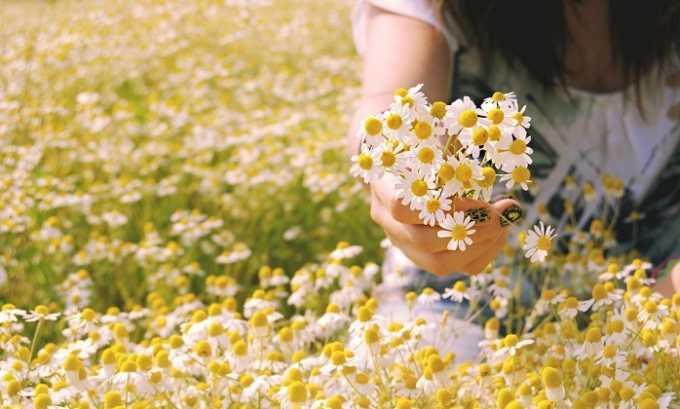 Препараты из цветков ромашки оказывают противовоспалительное и кровоостанавливающее действие